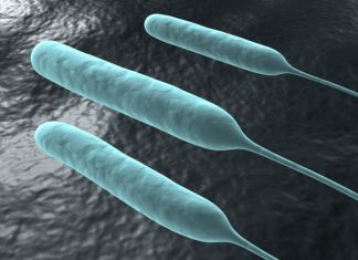 Pseudomonas aeruginosa 04.png27a8f66f 01cd 4a90 ba20 53d04fbd3074Original