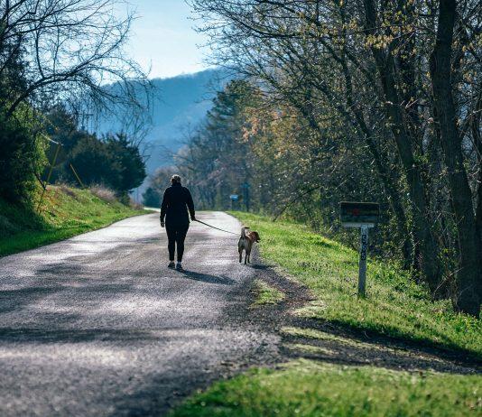 Una señora camina con su perro bajo los árboles