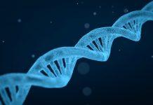 una imágen que muestra una secuencia genética