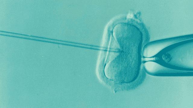 varicoză în invitro varicoză grenadă